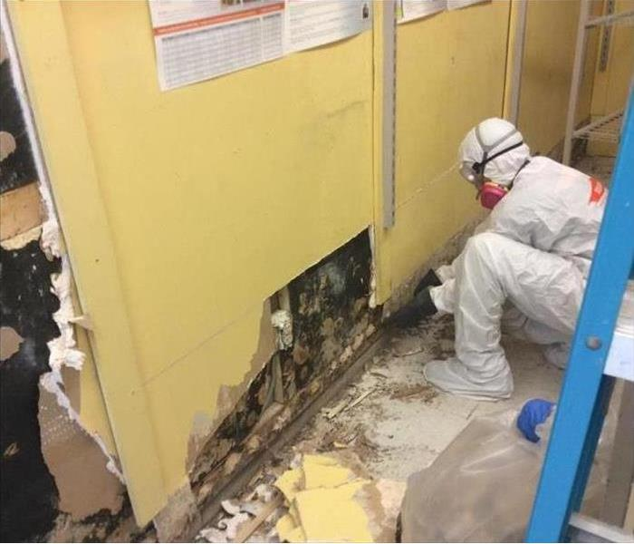 Mold Remediation How to Properly Handle Mold Damage