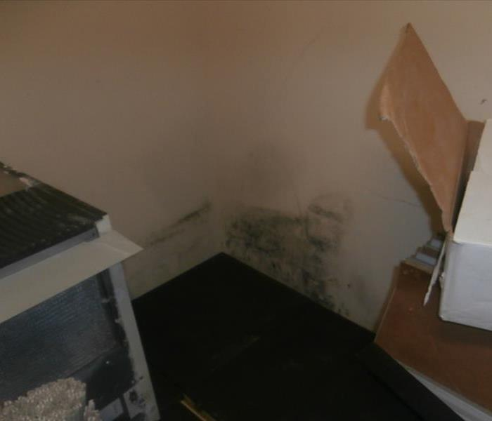 Mold Remediation  Stop Mold Growth in Your Business HVAC System